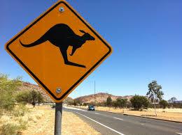 canguroo